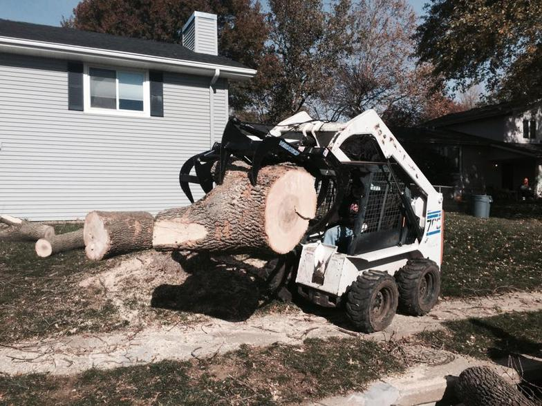 Tree Removal Kansas City, Missouri