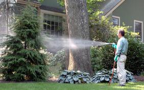 Ornamental Tree Spraying